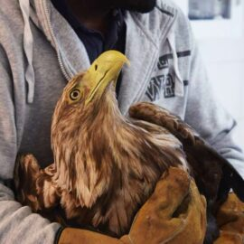 stockholms vildfågel rehab
